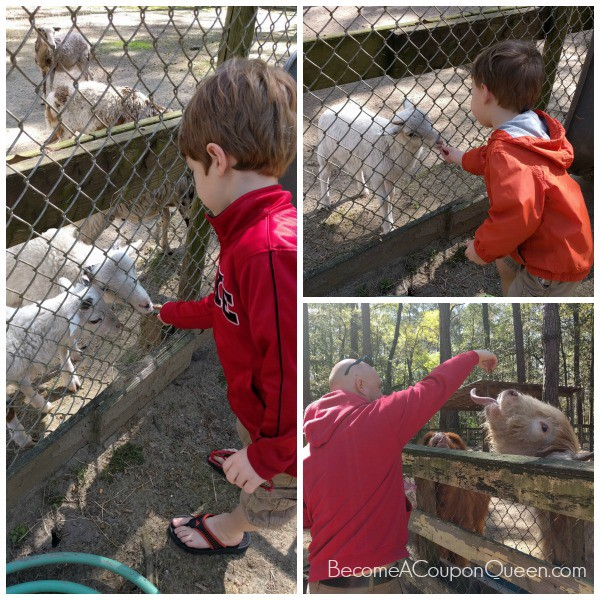 waccattee zoo - collage