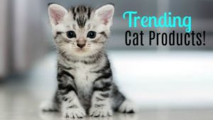 Trending Cat Products Your Cat Will Love!