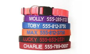Personalized Dog Collar Only $4.00!