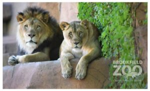 Brookfield Zoo Admission Tickets as low as $11.50!