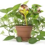 Plant Self-Watering Globes Multi Packs Only $4.99 (Was $27)!